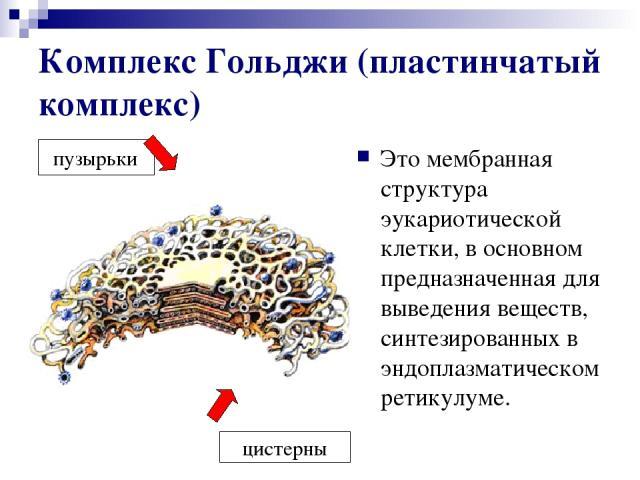 Комплекс Гольджи (пластинчатый комплекс) Это мембранная структура эукариотической клетки, в основном предназначенная для выведения веществ, синтезированных в эндоплазматическом ретикулуме. пузырьки цистерны