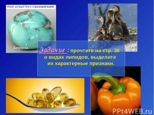 Бирюза Задание : прочтите на стр. 38 о видах липидов, выделите их характерные пр