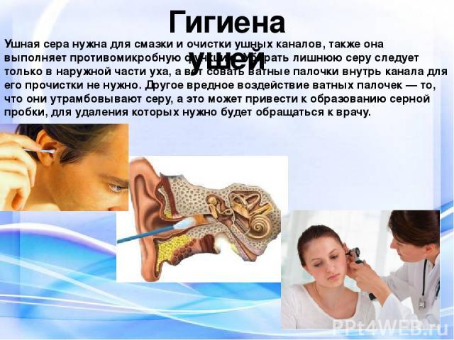 Гигиена ушей Ушная сера нужна для смазки и очистки ушных каналов, также она выполняет противомикробную функцию. Убирать лишнюю серу следует только в наружной части уха, а вот совать ватные палочки внутрь канала для его прочистки не нужно. Другое вре…