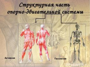 Тонус – состояние длительного удерживаемого незначительного напряжения мышц. Гип