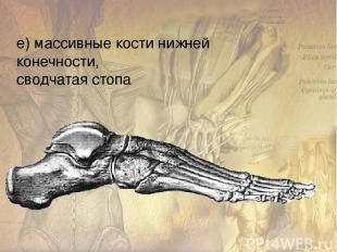 Мышцы человека Всего в теле человека около 600 скелетных мышц, которые составляю