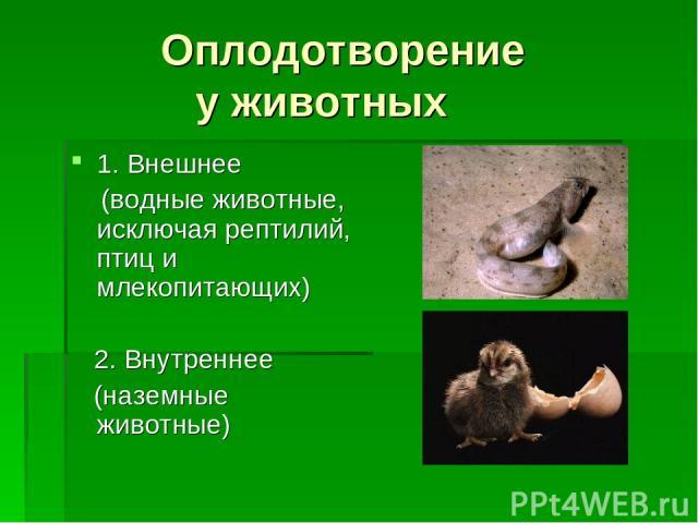 Оплодотворение у животных 1. Внешнее (водные животные, исключая рептилий, птиц и млекопитающих) 2. Внутреннее (наземные животные)