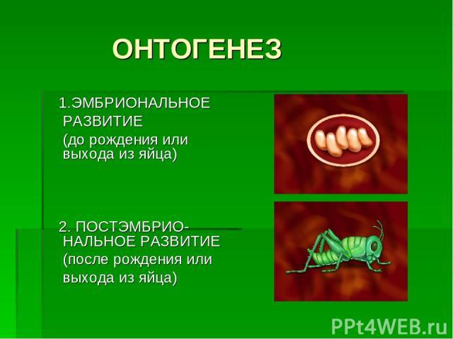 ОНТОГЕНЕЗ 1.ЭМБРИОНАЛЬНОЕ РАЗВИТИЕ (до рождения или выхода из яйца) 2. ПОСТЭМБРИО-НАЛЬНОЕ РАЗВИТИЕ (после рождения или выхода из яйца)