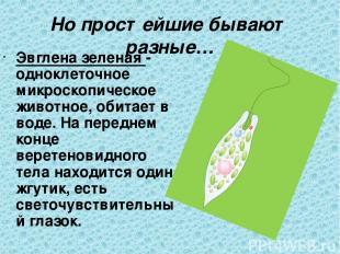 Но простейшие бывают разные… Эвглена зеленая - одноклеточное микроскопическое жи