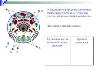 3 1 2 4 5 6 3. Рассмотрите на рисунке электронно-микроскопическую схему строения