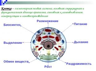 Клетка – элементарная живая система, основная структурная и функциональная едини