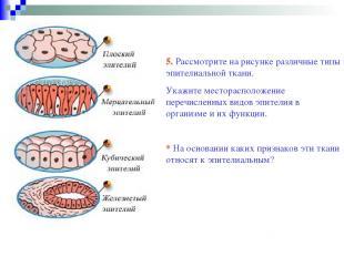 5. Рассмотрите на рисунке различные типы эпителиальной ткани. Укажите местораспо
