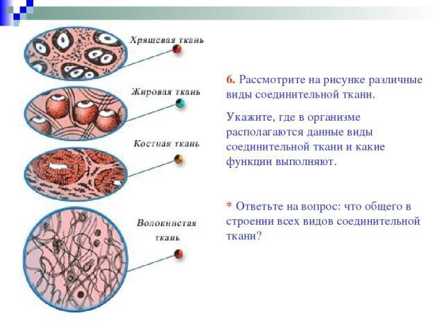 6. Рассмотрите на рисунке различные виды соединительной ткани. Укажите, где в организме располагаются данные виды соединительной ткани и какие функции выполняют. * Ответьте на вопрос: что общего в строении всех видов соединительной ткани?