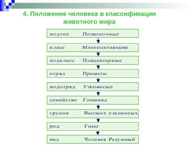 4. Положение человека в классификации животного мира