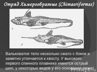 Отряд Химерообразные (Chimaeriformes) Вальковатое тело несколько сжато с боков и