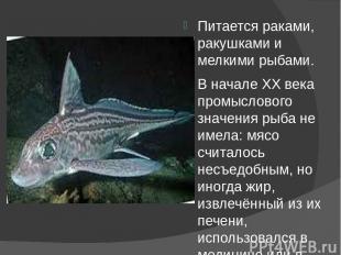 Питается раками, ракушками и мелкими рыбами. В начале XX века промыслового значе