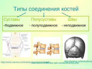 Типы соединения костей Суставы Полусуставы Швы -подвижное - полуподвижное - непо