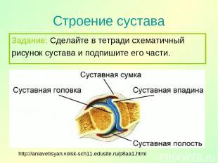 Строение сустава http://aniavetisyan.volsk-sch11.edusite.ru/p8aa1.html Задание: