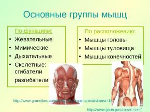Основные группы мышц По функциям: Жевательные Мимические Дыхательные Скелетные: