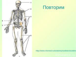 Повторим http://www.mixmed.ru/anatomy/sceleton/sceletonus/