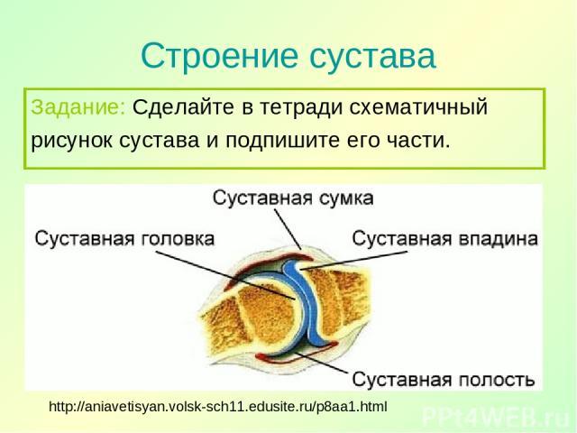 Строение сустава http://aniavetisyan.volsk-sch11.edusite.ru/p8aa1.html Задание: Сделайте в тетради схематичный рисунок сустава и подпишите его части.