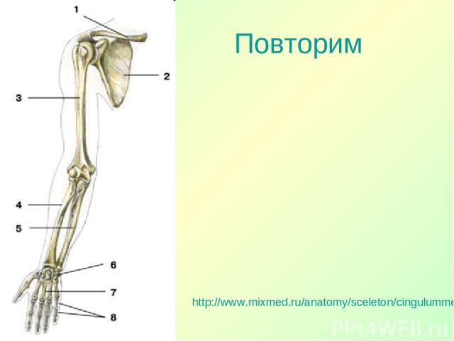 Повторим http://www.mixmed.ru/anatomy/sceleton/cingulummembrisuperioris/