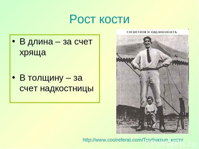 Рост кости В длина – за счет хряща В толщину – за счет надкостницы http://www.coolreferat.com/Трубчатые_кости
