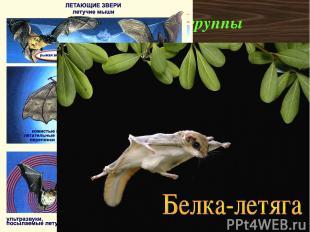 Экологические группы К настоящим летающим зверям относятся только рукокрылые (ле
