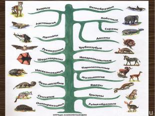 Классификация млекопитающих