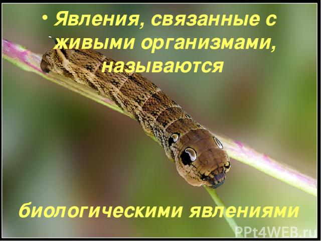 Явления, связанные с живыми организмами, называются биологическими явлениями