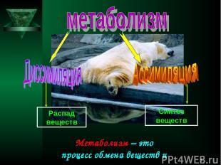 * Метаболизм – это процесс обмена веществ и энергии. Распад веществ Синтез вещес