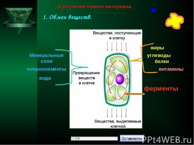 * белки жиры углеводы микроэлементы вода Минеральные соли витамины ферменты III.Изучение нового материала. 1. Обмен веществ.