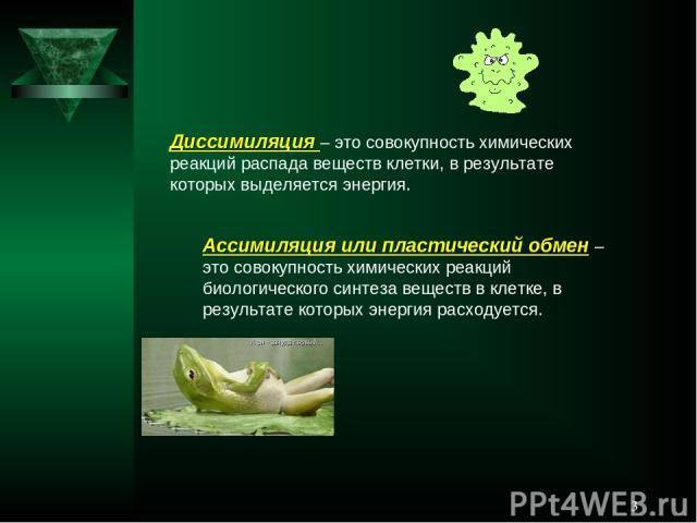 * Диссимиляция – это совокупность химических реакций распада веществ клетки, в результате которых выделяется энергия. Ассимиляция или пластический обмен – это совокупность химических реакций биологического синтеза веществ в клетке, в результате кото…