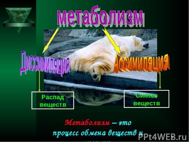 * Метаболизм – это процесс обмена веществ и энергии. Распад веществ Синтез веществ