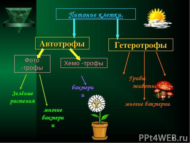 * Питание клетки. Автотрофы Фото -трофы Хемо -трофы Гетеротрофы Зелёные растения Грибы животные многие бактерии многие бактерии бактерии