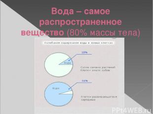 Вода – самое распространенное вещество (80% массы тела)