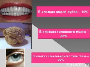 В клетках эмали зубов – 10% В клетках головного мозга – 85% В клетках стекловидн