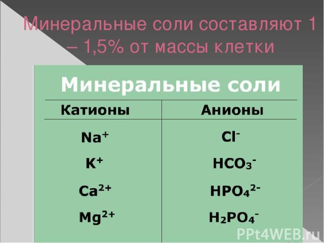 Минеральные соли составляют 1 – 1,5% от массы клетки