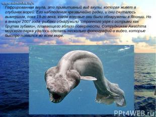 Гофрированная акула, это примитивный вид акулы, которая живет в глубинах морей.