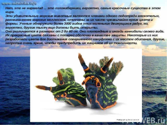 Нет, это не мармелад ... это голожаберники, вероятно, самые красочные существа в этом мире. Эти удивительные морские животные являются членами одного подотряда мягкотелых, раковина-менее морских моллюсков, отмечены за их часто чрезвычайно яркие цвет…