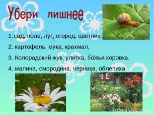 сад, поле, луг, огород, цветник. 2. картофель, мука, крахмал, 3. Колорадский жук