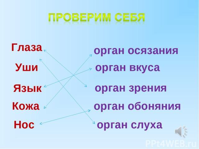 Глаза Уши Нос Кожа Язык орган осязания орган вкуса орган зрения орган обоняния орган слуха