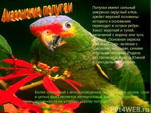 Попугаи имеют сильный умеренно округлый клюв, хребет верхней половины которого к
