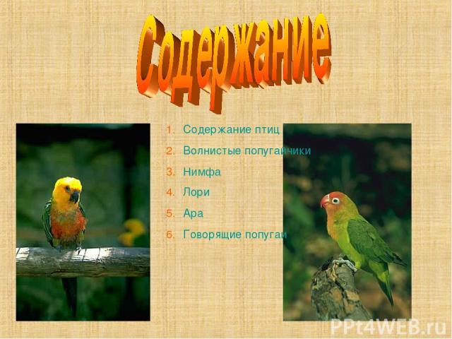 Содержание птиц Волнистые попугайчики Нимфа Лори Ара Говорящие попугаи