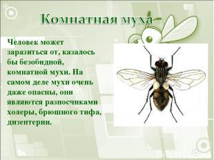 Человек может заразиться от, казалось бы безобидной, комнатной мухи. На самом де