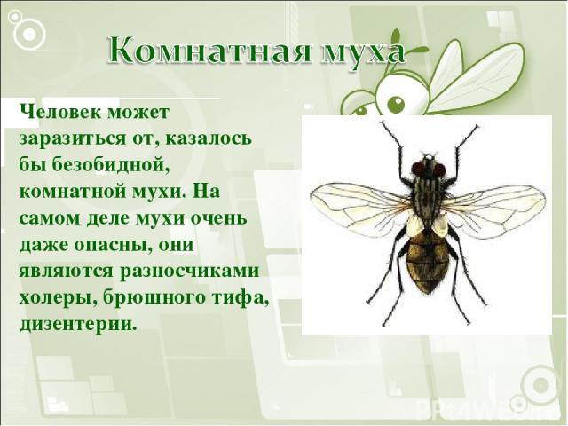 Человек может заразиться от, казалось бы безобидной, комнатной мухи. На самом деле мухи очень даже опасны, они являются разносчиками холеры, брюшного тифа, дизентерии.