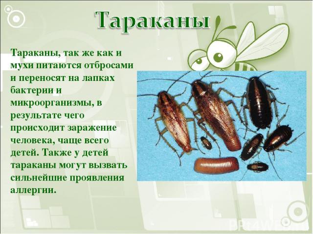 Тараканы, так же как и мухи питаются отбросами и переносят на лапках бактерии и микроорганизмы, в результате чего происходит заражение человека, чаще всего детей. Также у детей тараканы могут вызвать сильнейшие проявления аллергии.