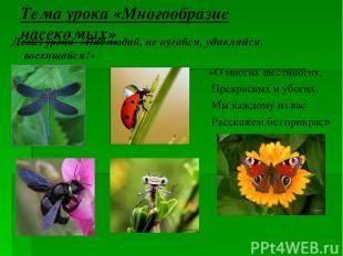 Тема урока «Многообразие насекомых» Девиз урока «Наблюдай, не пугайся, удивляйся