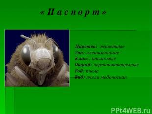 « П а с п о р т » Царство: животные Тип: членистоногие Класс: насекомые Отряд: п
