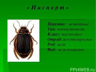 « П а с п о р т » Царство: животные Тип: членистоногие Класс: насекомые Отряд:же