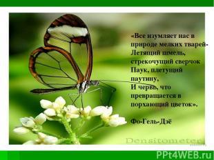 «Все изумляет нас в природе мелких тварей- Летящий шмель, стрекочущий сверчок Па