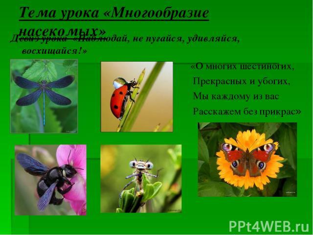 Тема урока «Многообразие насекомых» Девиз урока «Наблюдай, не пугайся, удивляйся, восхищайся!» «О многих шестиногих, Прекрасных и убогих, Мы каждому из вас Расскажем без прикрас»