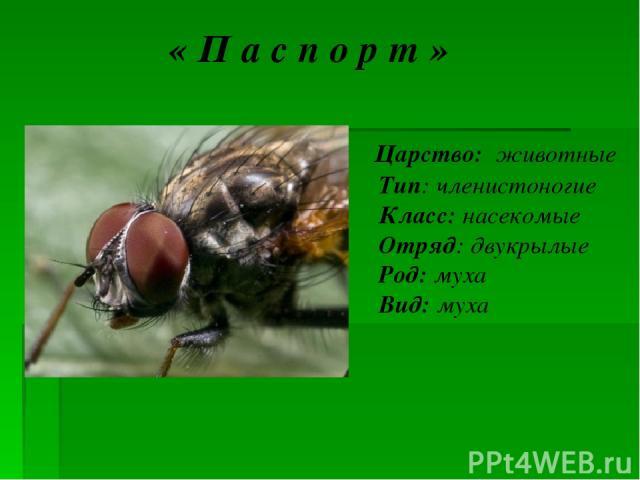 « П а с п о р т » Царство: животные Тип: членистоногие Класс: насекомые Отряд: двукрылые Род: муха Вид: муха комнатная