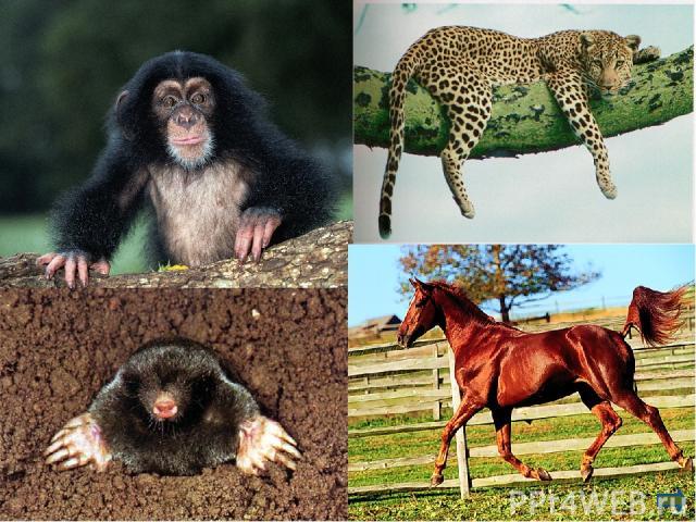 Конвергенция (отлат.convergere— сближаться, сходиться) схождение признаков в процессе эволюции неблизкородственных групп организмов, приобретение ими сходного строения в результате существования в сходных условиях и одинаково направленного естес…
