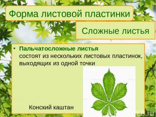 Сложные листья Пальчатосложные листья состоят из нескольких листовых пластинок,